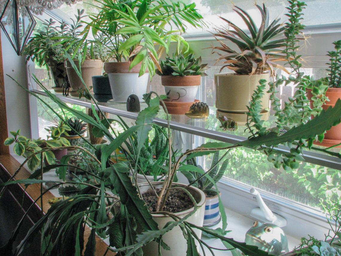 Houseplants in kitchen window