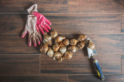 This month in gardening - October - plant bulbs